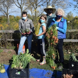 Ron Ory Community Garden Plot Volunteers Harvest Donations for Loaves & Fishes